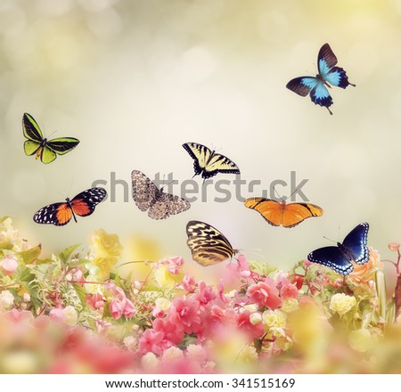 Flowers and Butterflies for Background - stock photo