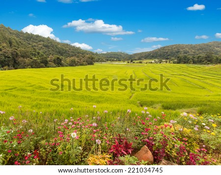Flowers and Fields in the mountains - stock photo
