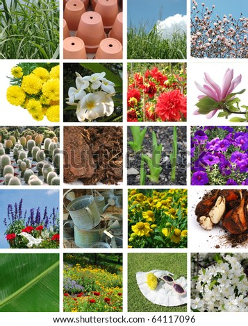 Flowers and garden collection - stock photo
