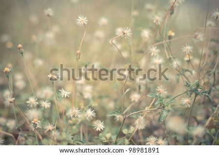 Flowers and Grass Vintage - stock photo