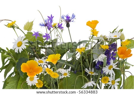 Flowers and green meadow plants. Isolated on white. - stock photo