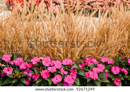 Flowers and hay. - stock photo