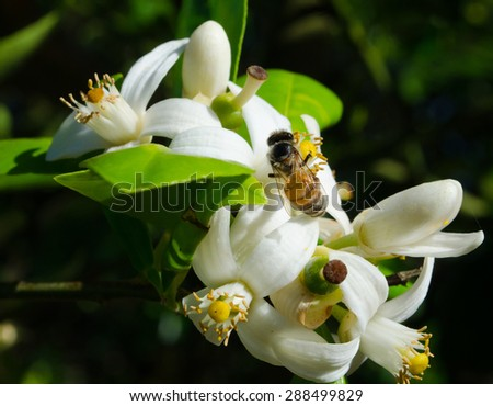Flowers and honey bees - stock photo