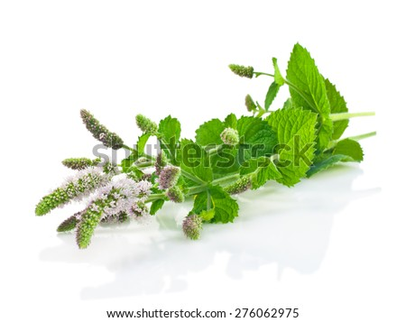 Flowers and leaves of fresh mint on a white background - stock photo