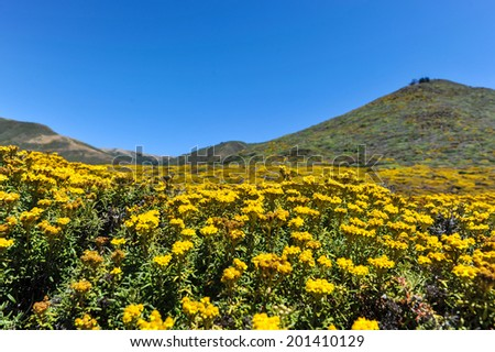 Flowers and mountain in Garrapata State Park - stock photo