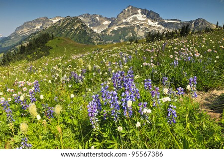 Flowers and mountains - stock photo