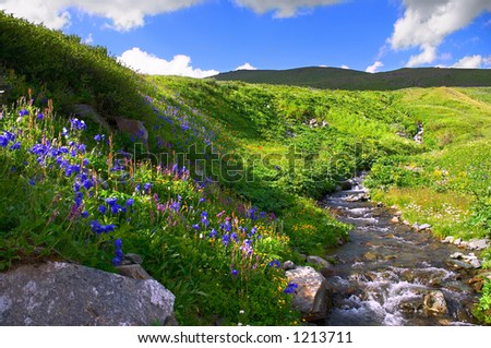 Flowers and mountains, Altay - stock photo