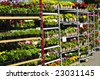 Flowers and plants for sale for planting in spring - stock photo