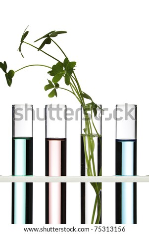 Flowers and plants in test tubes - stock photo