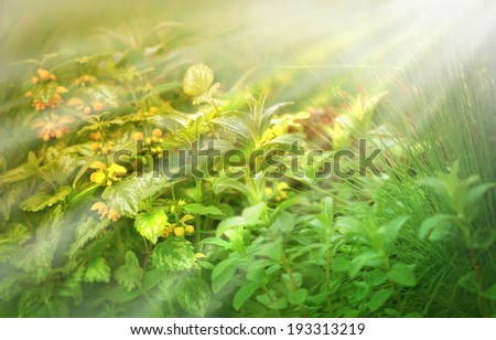 Flowers and plants lit by the morning sun rays - stock photo
