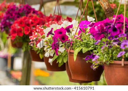 Flowers and plants with pots in the greenhouse - stock photo