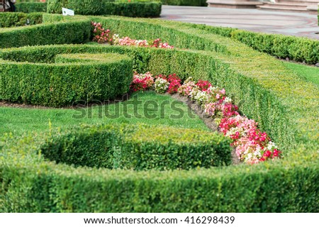 flowers and shrubs in the landscape design  - stock photo