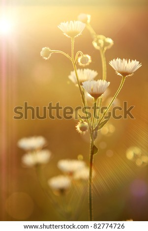 flowers and sun - stock photo