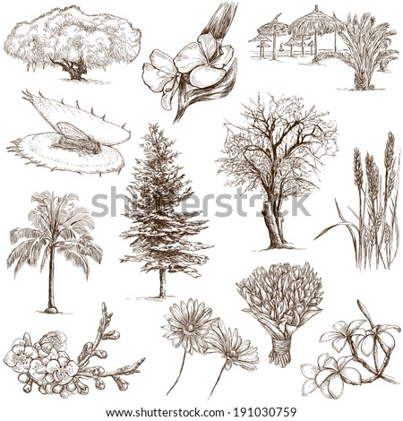 Flowers and Trees around the World (set no.2, white) - Collection of an hand drawn illustrations. Description: Full sized hand drawn illustrations drawing on white background - stock photo