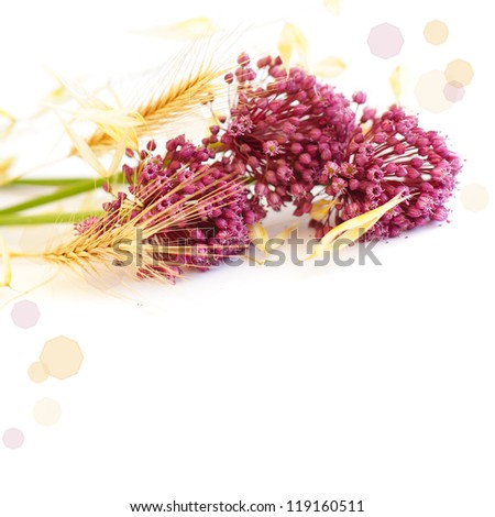 Flowers and wheat, border - stock photo