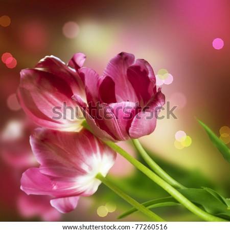 Flowers.Anniversary Card Design - stock photo