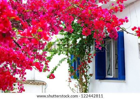 flowers around the window - stock photo