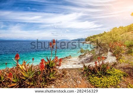 Flowers at Adriatic sea coast - stock photo