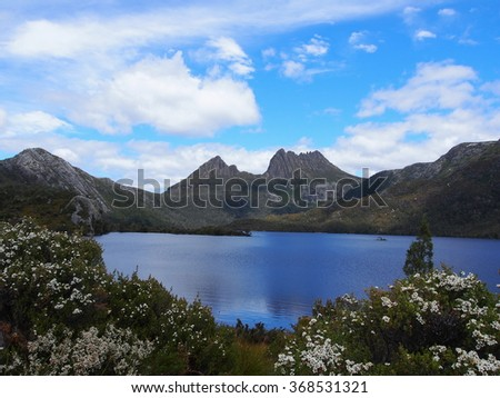 Flowers at cradle mountain and dove lake