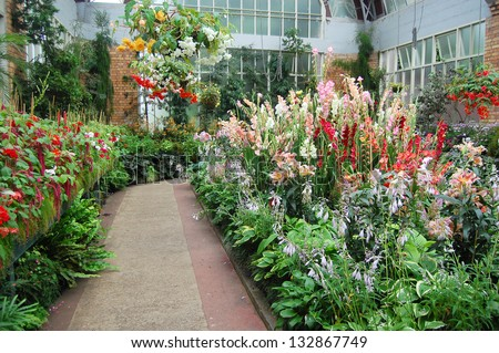 Flowers at greenhouse