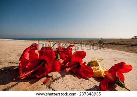 Flowers at the beach - stock photo