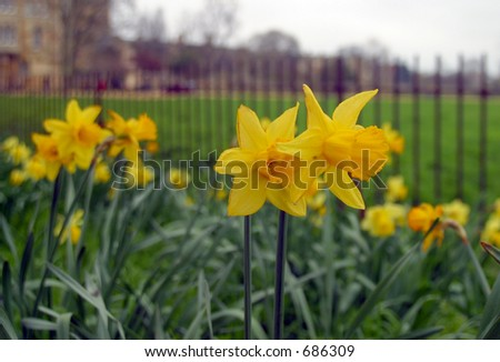 Flowers at the garden - stock photo