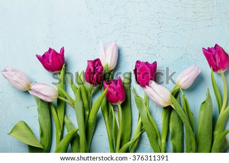 flowers background, spring tulips - stock photo