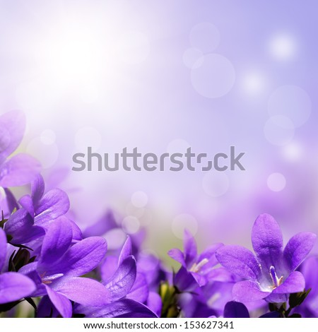 Flowers background with purple campanula flowers - stock photo