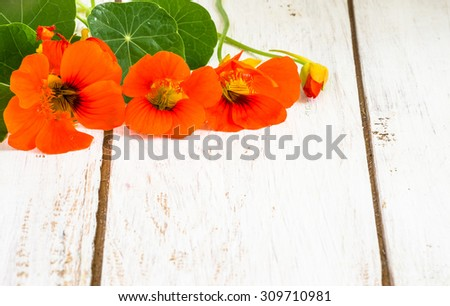 Flowers backgrounds with flowers of nasturtium isolated on white wood background useful as greeting card,wedding invitation, mothers day or invitations card. - stock photo