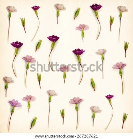 Flowers bakground - stock photo