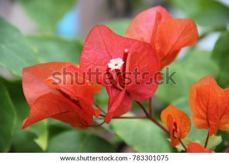 Flower flower colorful beautiful flower orange 569021917 beautiful orange paper flower background voltagebd Gallery