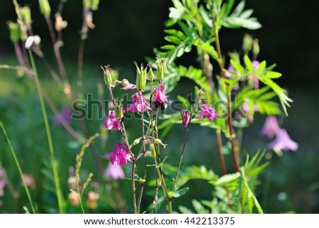 Flowers bells. Summer flowers. Summer meadow. Beautiful meadow and wildflowers and grass - stock photo