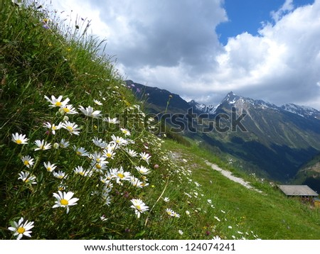 Flowers beside the trail - stock photo