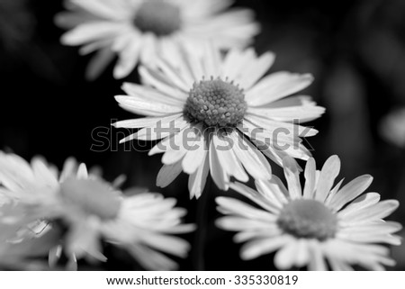 Flowers black and white - stock photo