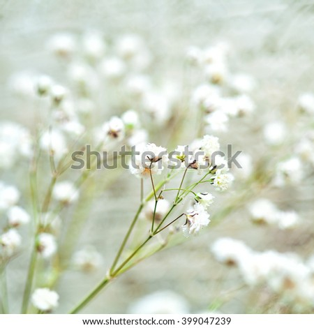 flowers bloom on the field - stock photo