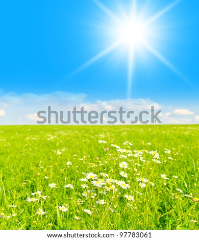 Flowers Blooming Grass Land