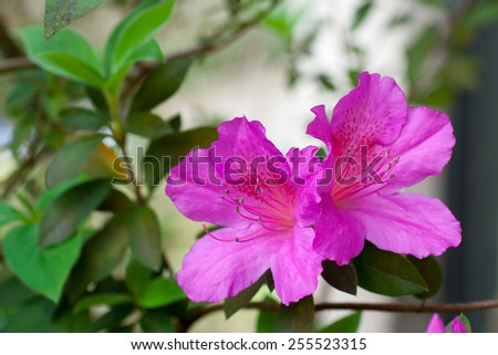 flowers blooming in new spring growth - stock photo