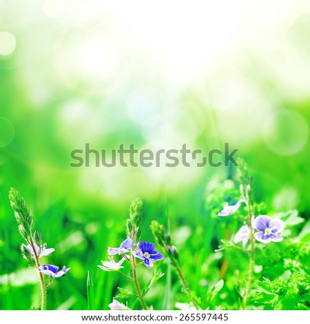 flowers blooming in spring farm field - stock photo