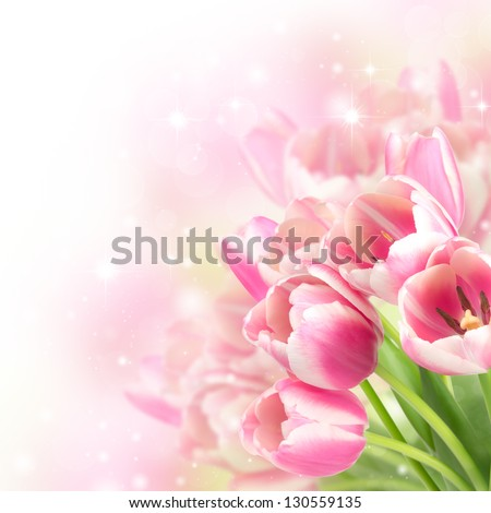 Flowers blooming tulips on a blurred background - stock photo