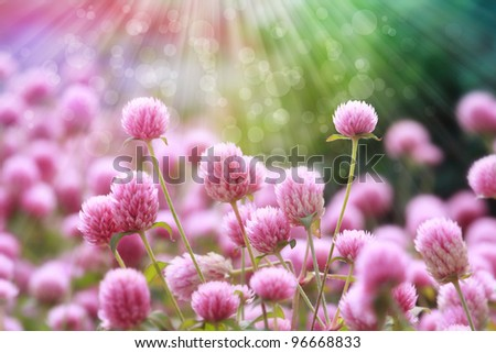 flowers blooming with sun rays abstract background, shallow depth of field - stock photo