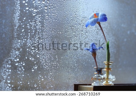 flowers blue book novel concept of love - stock photo
