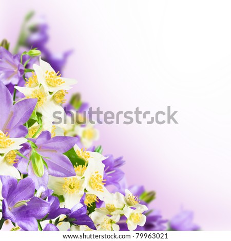 Flowers blue campanulas and white jasmine on pink white background - stock photo