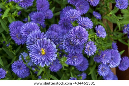 Flowers. Blue flowers. Flowers in vase. Flower. Flowers on old wood. Card with flowers. Flowers Blue flowers. Spring flowers in watering can.  - stock photo