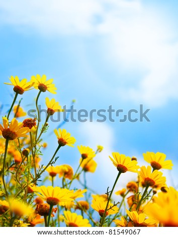 Flowers border, field of fresh yellow daisies over blue sky natural background - stock photo