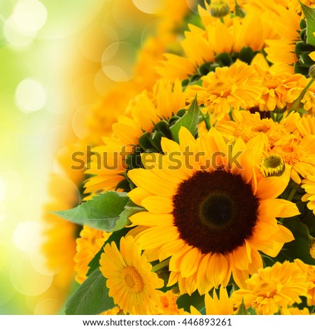 flowers border  with sunflowers and marigold  flowers - stock photo