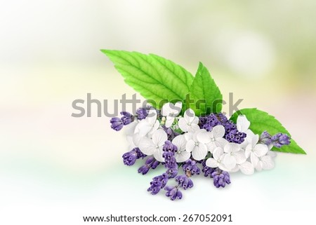 Flowers. Bunch of lavender nd jasmine flowers on a white background - stock photo