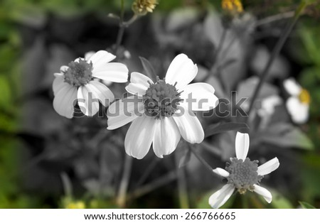 Flowers by the media to love the desert. - stock photo