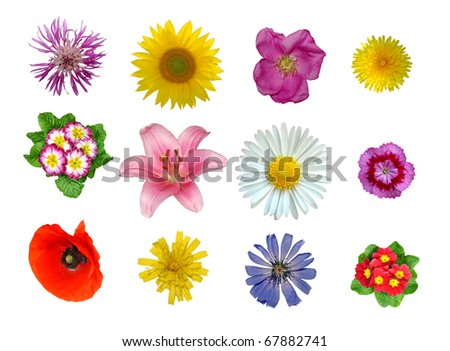 flowers closeup isolated - stock photo