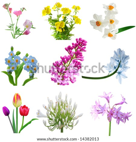Flowers collection isolated on white background - stock photo