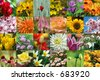 flowers collection (see more flower and nature collages in my gallery) - stock photo